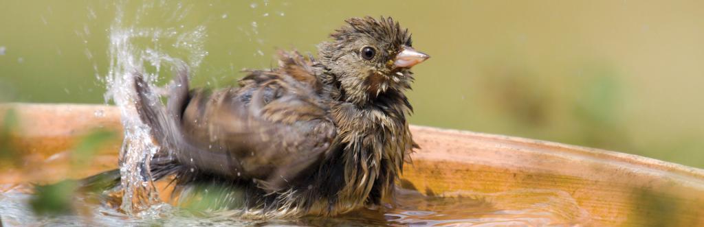 bird-bath-wide_zps708dd39c