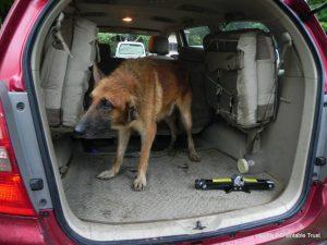 The abandoned dog rescued and got to Jivdaya