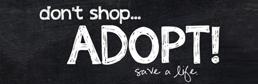 dont' shop adopt